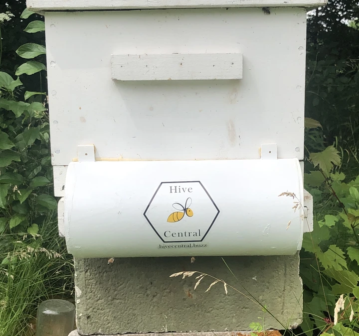 UW Students Create a Buzz with Bee Shield