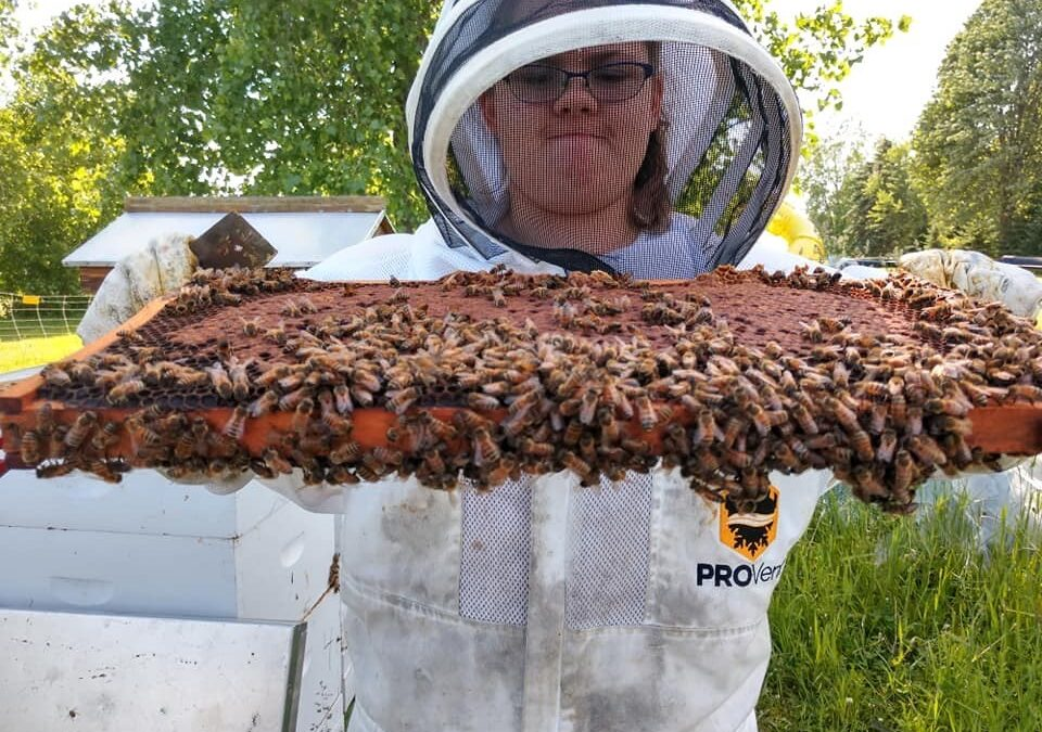 WHPA 2021 Youth Beekeeper Scholarship Program Seeks Applicants